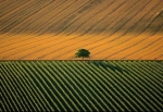 Landsaft agricol langa orasul Cognac, Franta