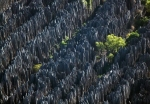 Padurea de piatra Tzinghi-de-Bemaraha in Madagascar